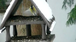 Olvasói videó: madarak az etetőn