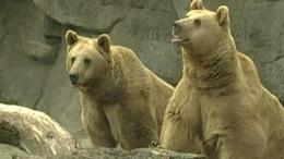 A medve meglátta az árnyékát