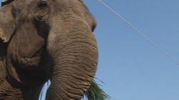 3 elefánt, 35 fős csapat, 1200 néző