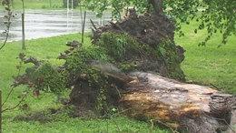 Vezetéket tépett el egy kidőlt fa Magyaratádon
