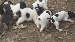 Kutyául bánnak az állatokkal