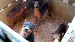 Szörnyű körülmények között tartotta kutyáit a jákói asszony