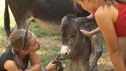 Kisemu, kiscsacsi és kismalacok is születtek a Meistro tanyán