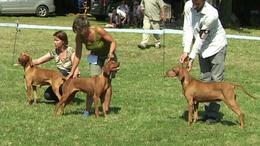 Nemzetközi kutyamustra Kaposváron