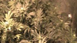 Több tízmilliós drogfogás Siófokon