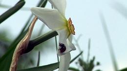 Fehér virágszőnyeg borítja a mezőt Babócsán