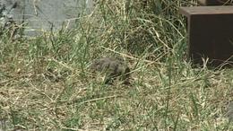 Gránátot találtak a kaposvári mentőállomáson