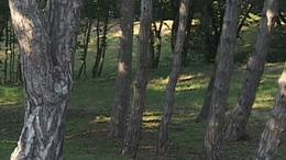 Vár-domb - Balatonboglár