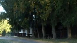 Tókaji parkerdő - Kaposvár