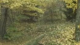 Petekúti forrás - Iharosberény
