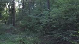 Patkó-kúti erdő - Szorosad