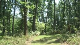 Öreg erdő tanösvény - Kaszó