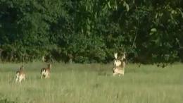 Lábodi vadászterület