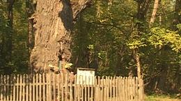 Képes fa - Mesztegnyő