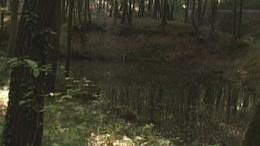 Gyertyánosi parkerdő - Kaposvár
