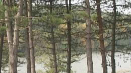 Desedai arborétum - Kaposvár