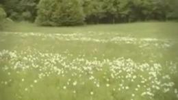 Basa kert, nárciszos - Babócsa