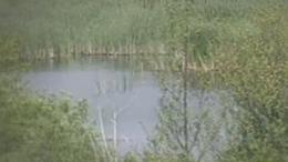 Baláta-tó - Kaszó