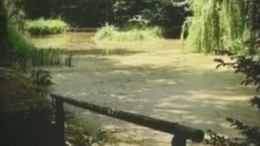 Arborétum - Kaposdada