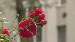 Egyre sikeresebb a Virágosabb, zöldebb Kaposvárért pályázat