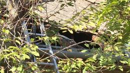Kigyulladt egy családi ház a Losonc utcában