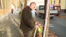 Különleges eszközökkel vizsgálják át a kaposvári fákat